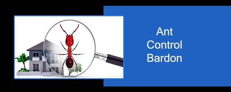Ant Control Bardon