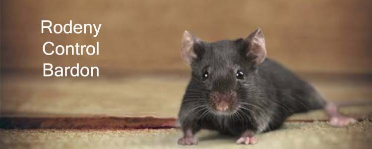 Rodent Control Bardon